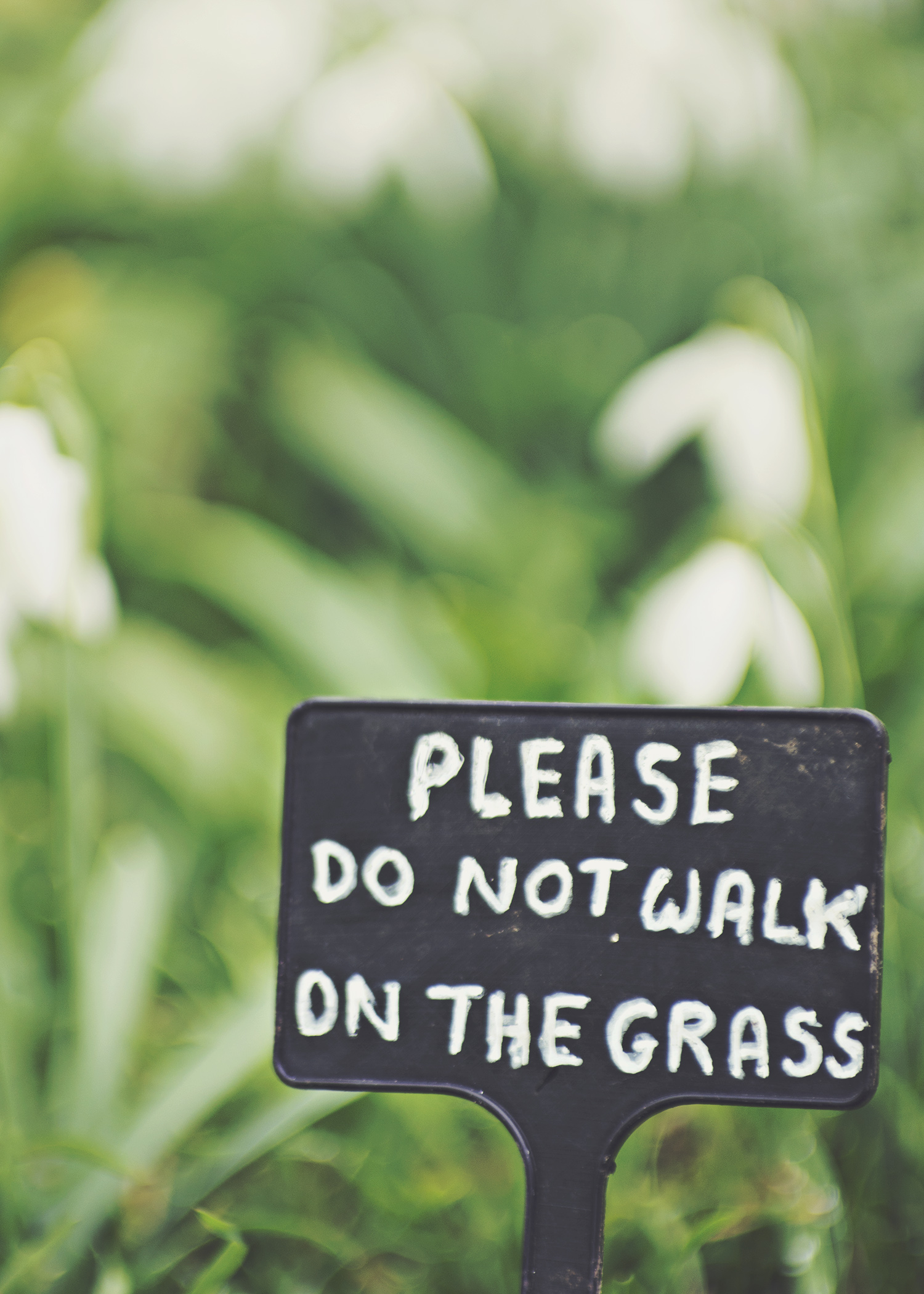 Don't walk on the grass
