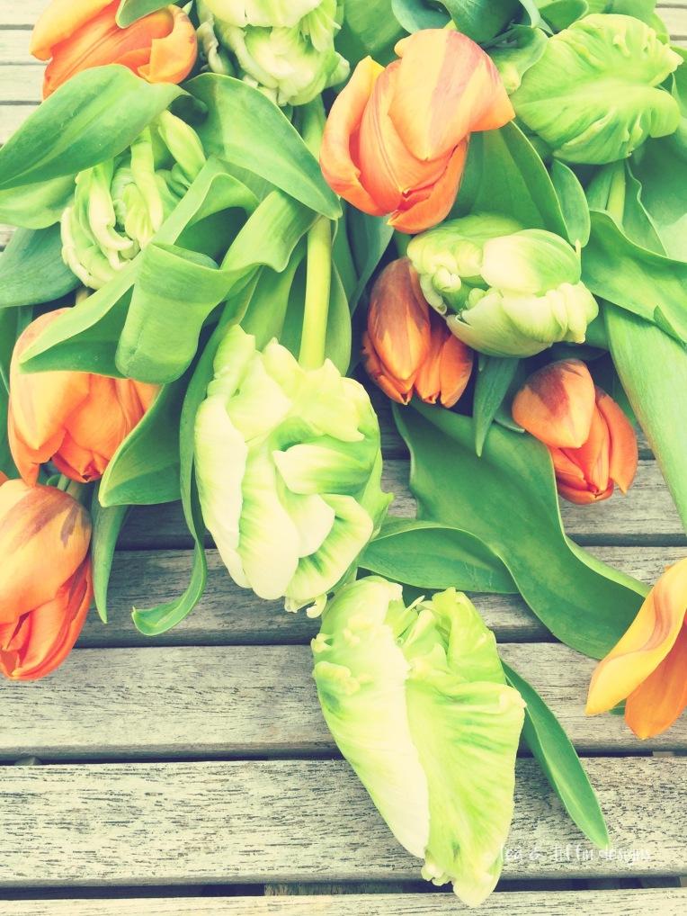 orange and green iphone shot resized