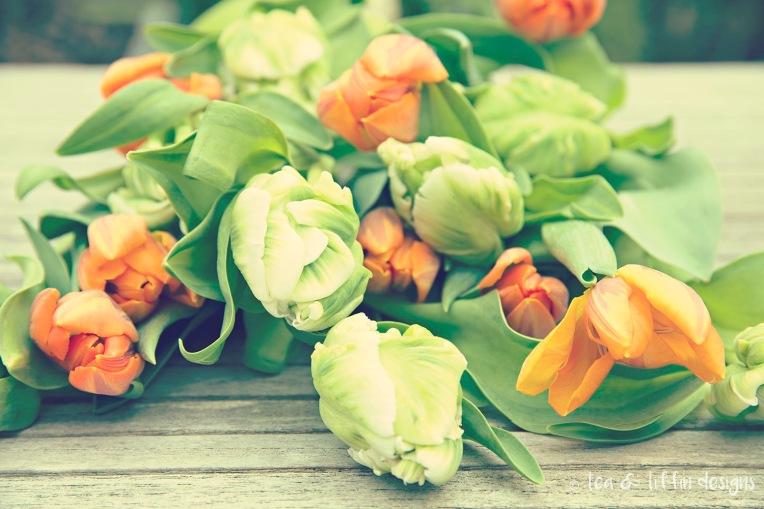 orange and green tulips resized