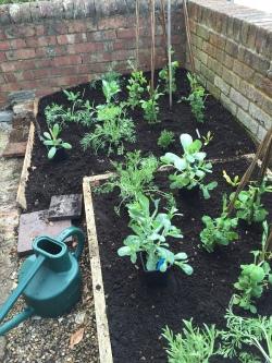 Planting annuals