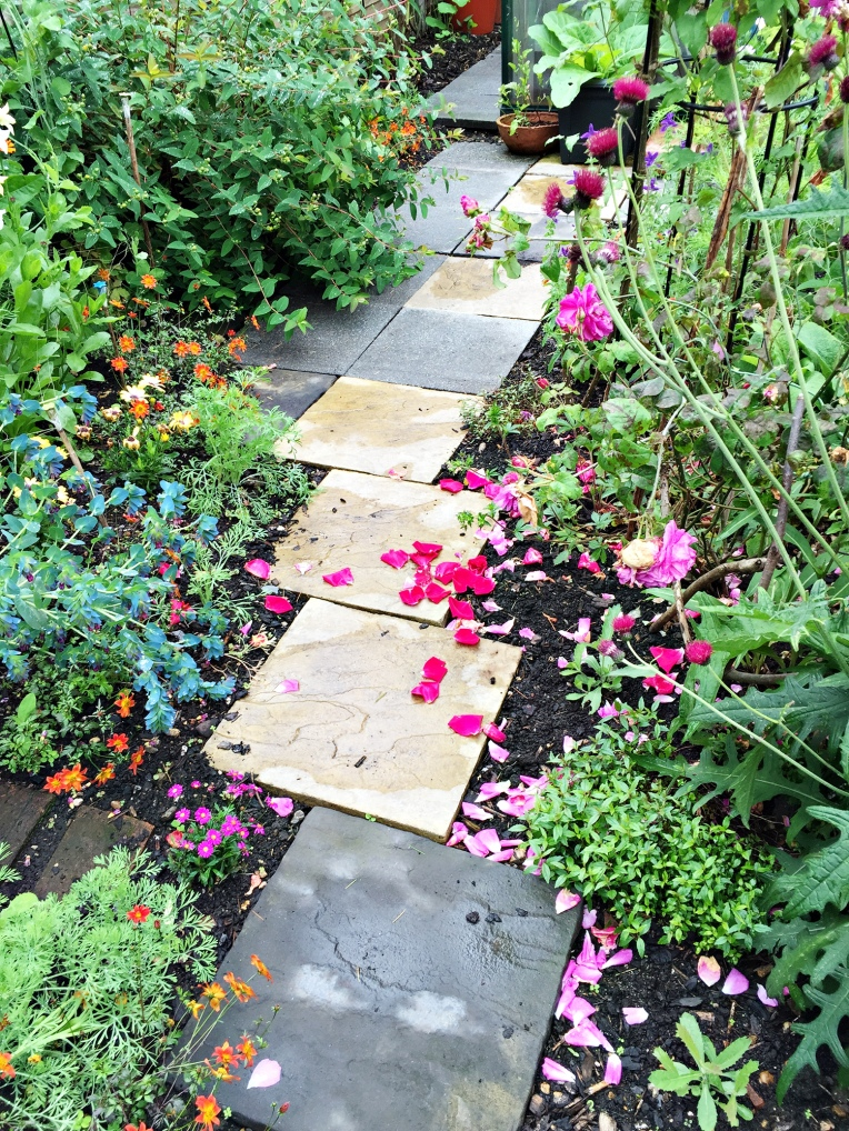 pathway and petals