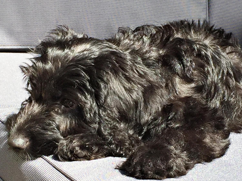 Tilly 13 weeks 2