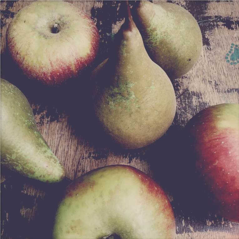 apples-and-pears-still-life