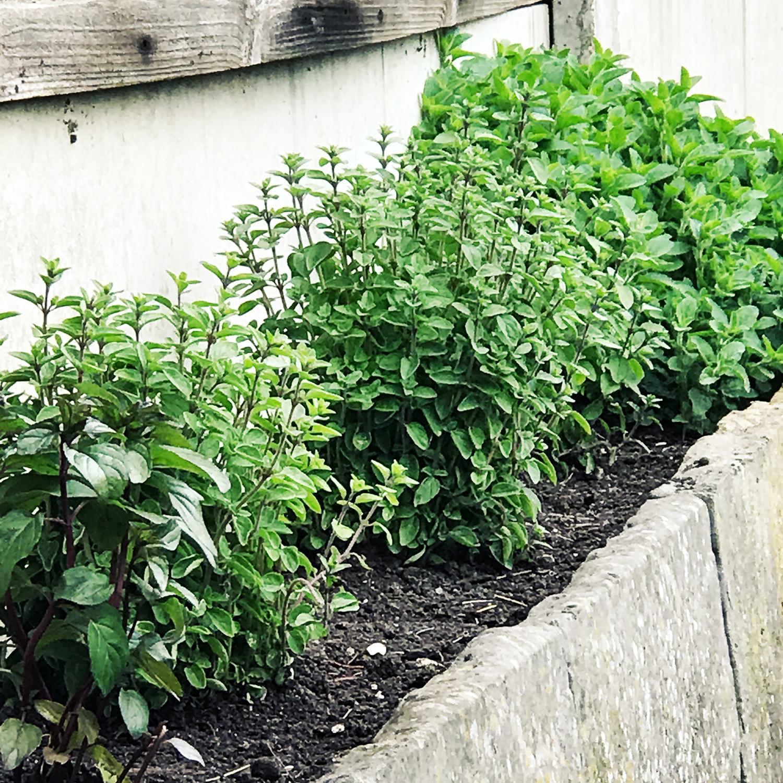 Modern garden 4