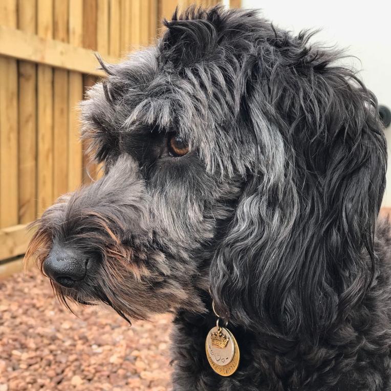 Tilly in Devon 2