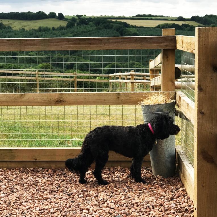 Tilly in Devon copy