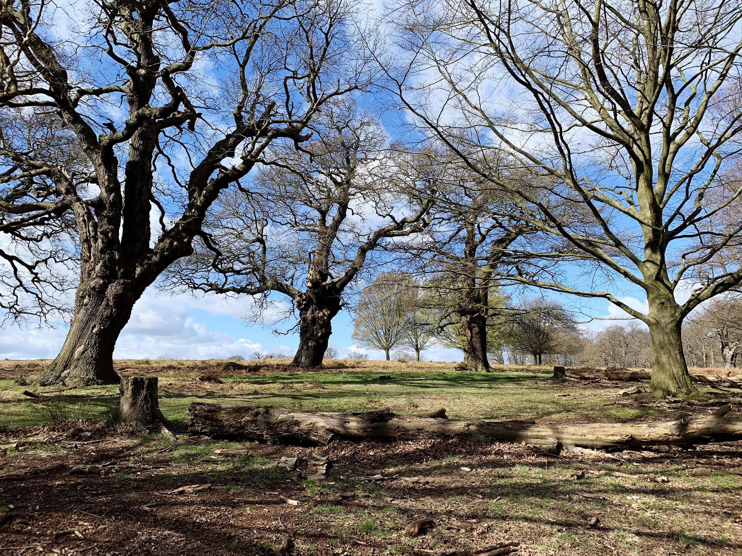 Richmond Park 1