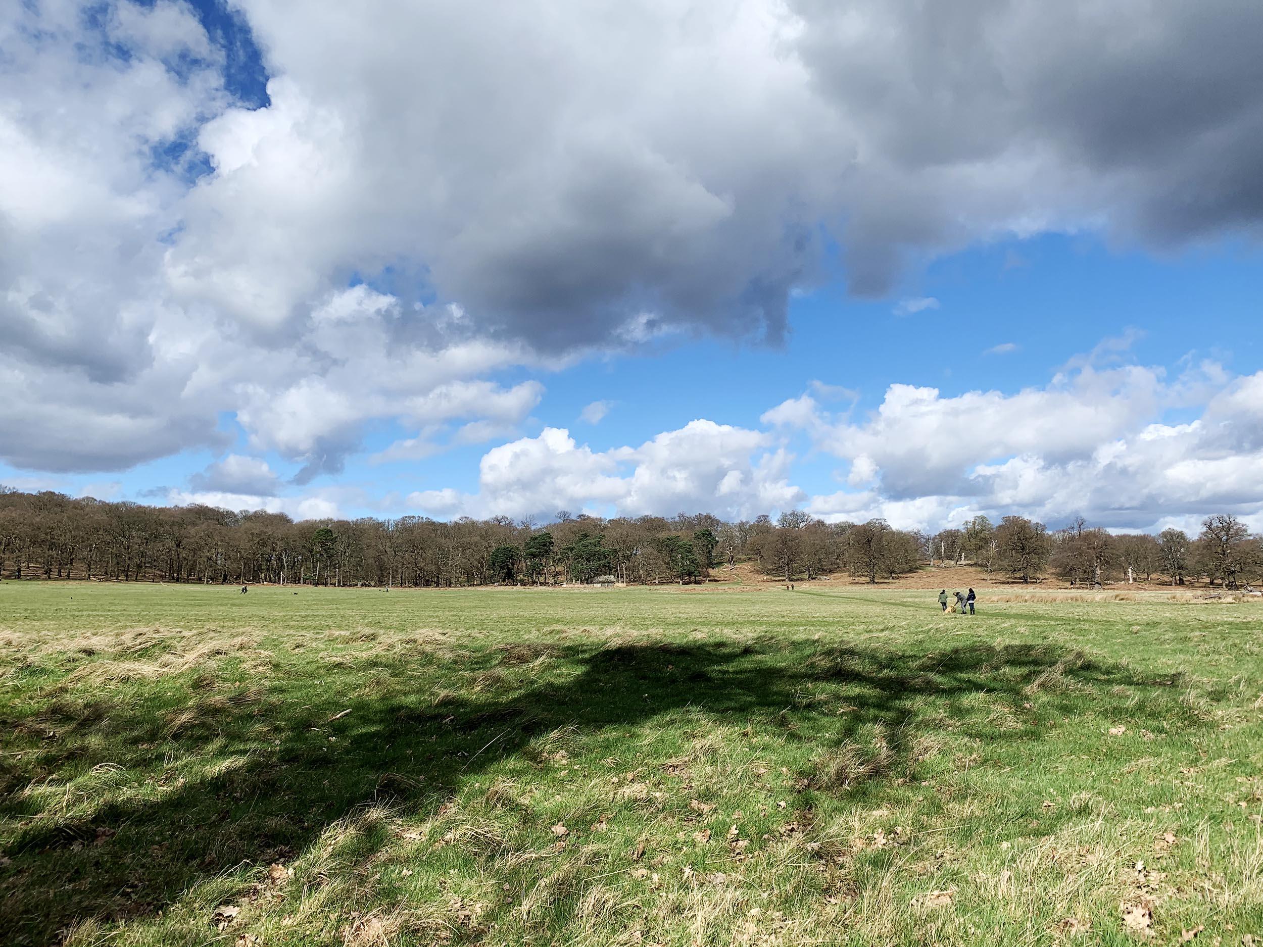 Richmond Park 2