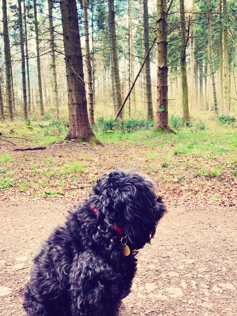 wendover woods 3