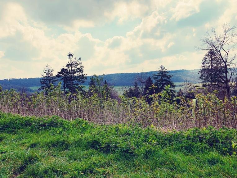 wendover woods 5
