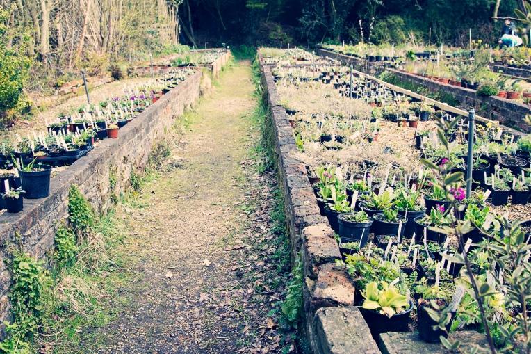 sanuk plants